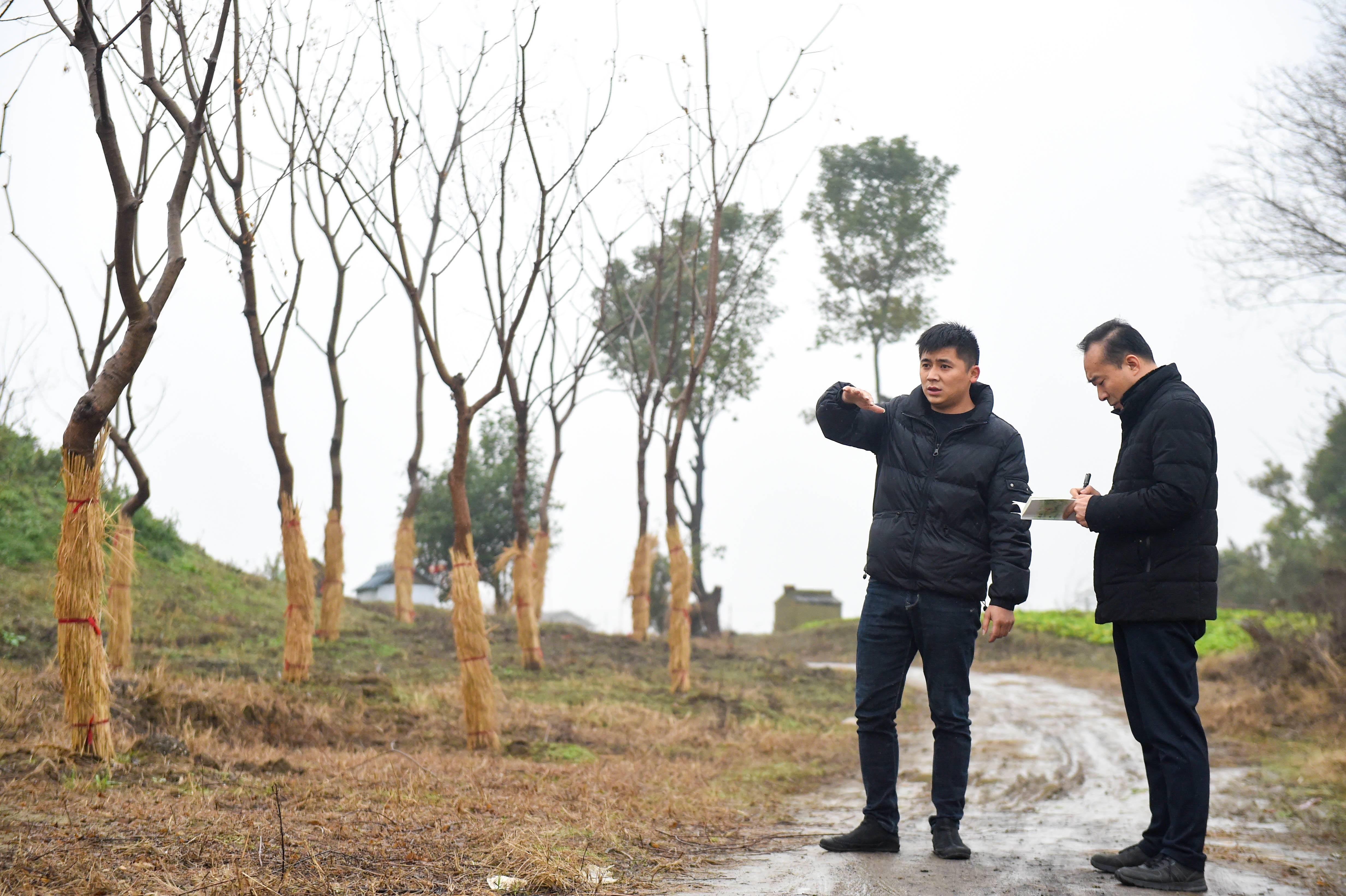杨志向记者介绍20亩苗圃基地情况。